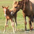 Stock Photo: Horse and foal