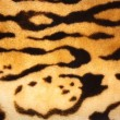 Stock Photo: Tiger Texture