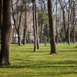 City park in spring - Stock Photo