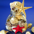 Shells and fish stars — Stock Photo #2715469