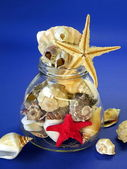 Shells and fish stars — Stock Photo