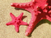 Červené ryby hvězdy — Stock fotografie