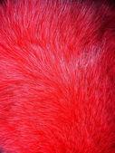 Red fox futro — Zdjęcie stockowe