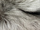 Silver fox fur — Stock Photo