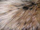 Natural fox fur — Stock Photo
