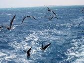 Sea gull vogels — Stockfoto