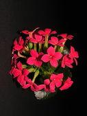 Flor roja — Foto de Stock