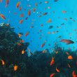 Stock Photo: Coral reef and fish