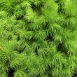 Green foliage — Stock Photo #3177456