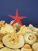 Shells and red star — Stock Photo
