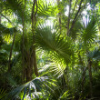 Jungle background — Stock Photo #3535358