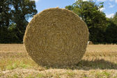 Frontal view of a hay bale — Stock Photo