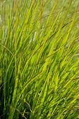 草叶 — 图库照片