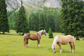 Horses grazing in a mountain meadow — Stock Photo