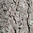 Pine tree bark texture — Stock Photo #3085455