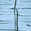 Grass against lake — Stock Photo #3911563