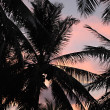 Sunset and palm trees — Stock fotografie #3005402