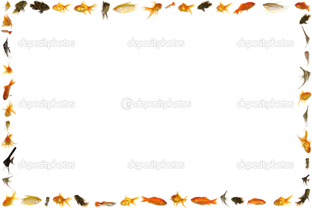 Marco de peces aislado sobre fondo blanco foto de stock for Fish photo frame