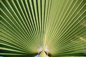 棕榈叶 — 图库照片