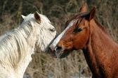 愛の馬 — ストック写真