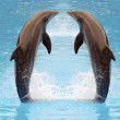 Dolphin twins jumping — Stock Photo
