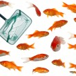 Many goldfish and net - Stock Photo