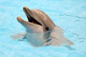 Happy dolphin smiling — Stock Photo
