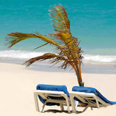 Sun lounger and palm at exotic beach — Stock Photo