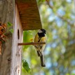 Bird and house — Stock Photo #3854605
