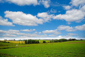 Farmland with blue and cloudy sky — Stock Photo