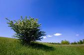 Cespuglio verde — Foto Stock