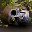 Skull in Ivy — Stock Photo