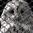Stock Photo: Owl under grating