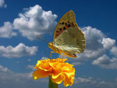 Butterfly over sky — Stock Photo