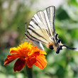 Butterfly on flower — Stock Photo #3601178
