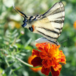 Butterfly — Stock Photo #3608013
