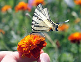 Hand holding flower with butterfly — Stock Photo