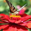 Butterfly on flower — Stock Photo #3623397