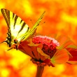 Butterfly on flower — Stock Photo #3629433