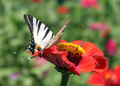 Butterfly with opened wings — Stock Photo