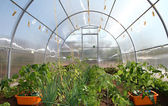 Small hothouse of Polycarbonate with seedlings — Stock Photo
