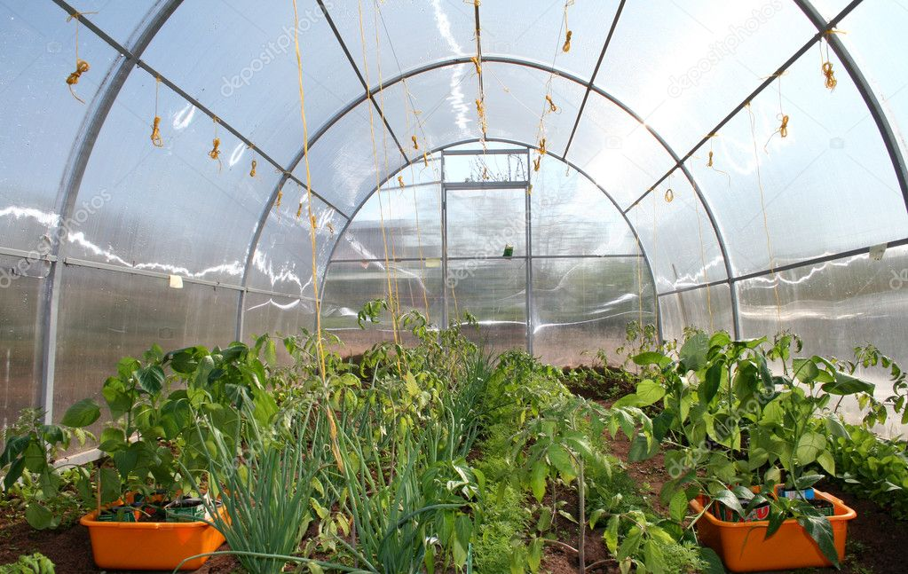 Small hothouse of Polycarbonate with seedlings  Stock Photo #3081311