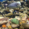 Aquarium fish — Stock Photo #3133167