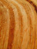 Tree Stump Background — Stock Photo