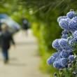 Flowers with a shallow depth of field — Stock Photo