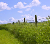 Traditional English hedgerow — Stock Photo