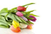 Bunte Tulpen — Stockfoto