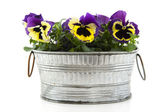 Pansies in zinc bucket — Stock Photo