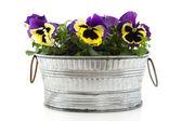 Pansies in zinc bucket — Stock Photo
