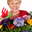 Elderly woman is gardening — Stock Photo